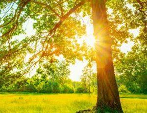 L'arbre de vie : un outil pour accompagner les ados